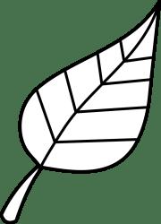 outline leaf clipart transparent leaves clip leave webstockreview coloured