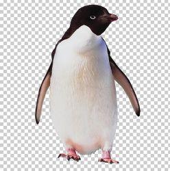 penguin adelie clipart lie ad webstockreview emperor antarctica bird