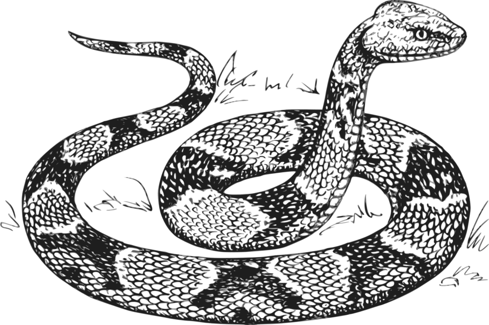 Clipart snake copperhead, Clipart snake copperhead
