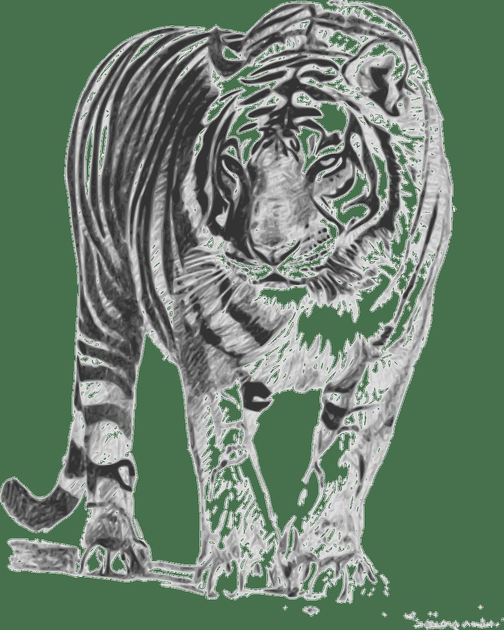 Clipart tiger sumatran tiger, Clipart tiger sumatran tiger