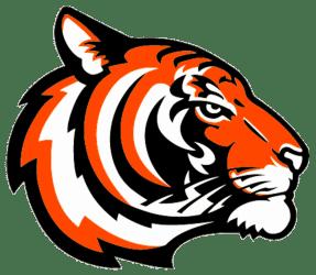 tiger teacher clipart clip transparent webstockreview bengals bengal