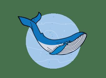 ecosystem marine clipart whale transparent webstockreview biology wonders age