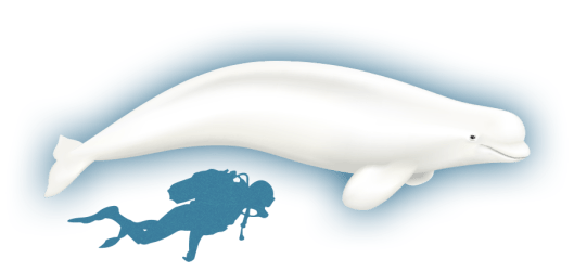 whale minke clipart transparent whales webstockreview arctic baffin