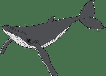 whale clipart transparent clip sperm humpback webstockreview
