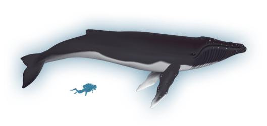 whale spout water clipart humpback whales arctic wiki transparent webstockreview baffin bay bowhead