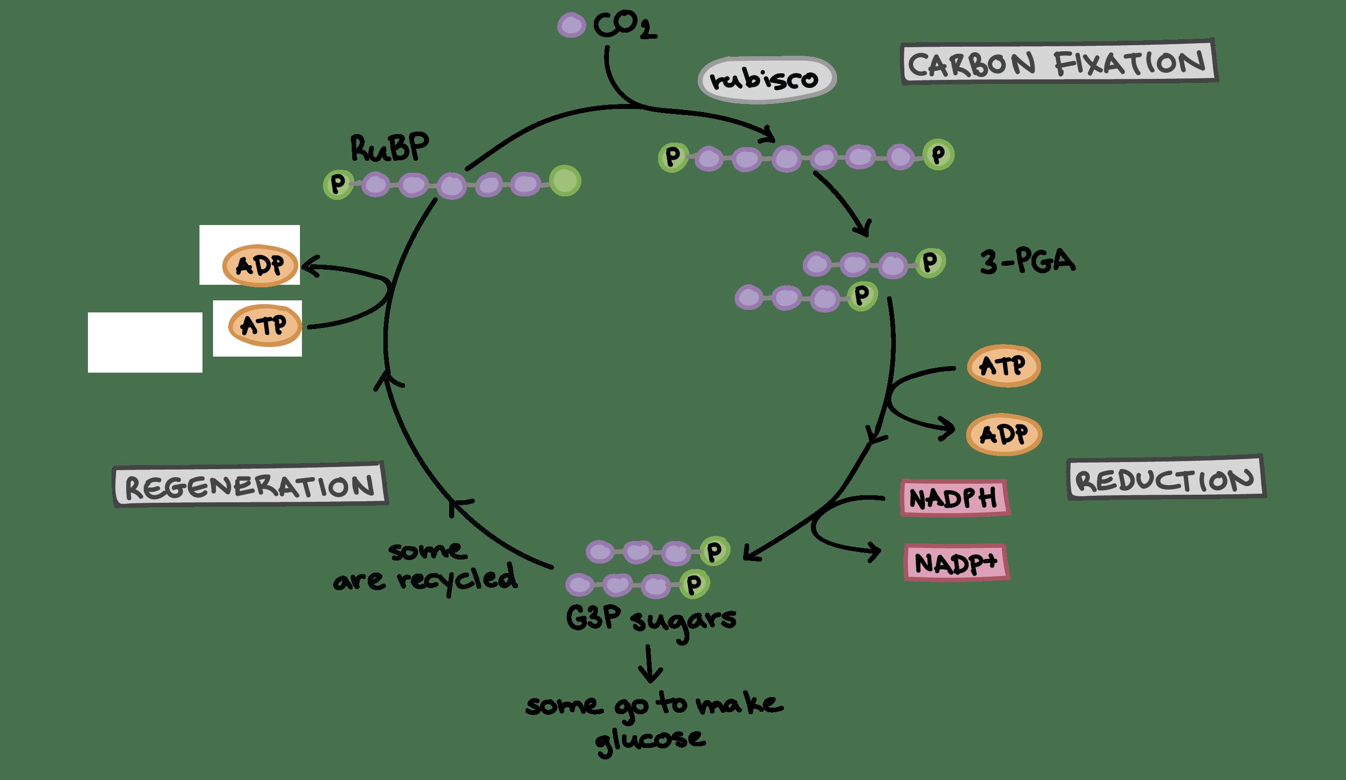 Cycle Clipart Process Cycle Cycle Process Cycle