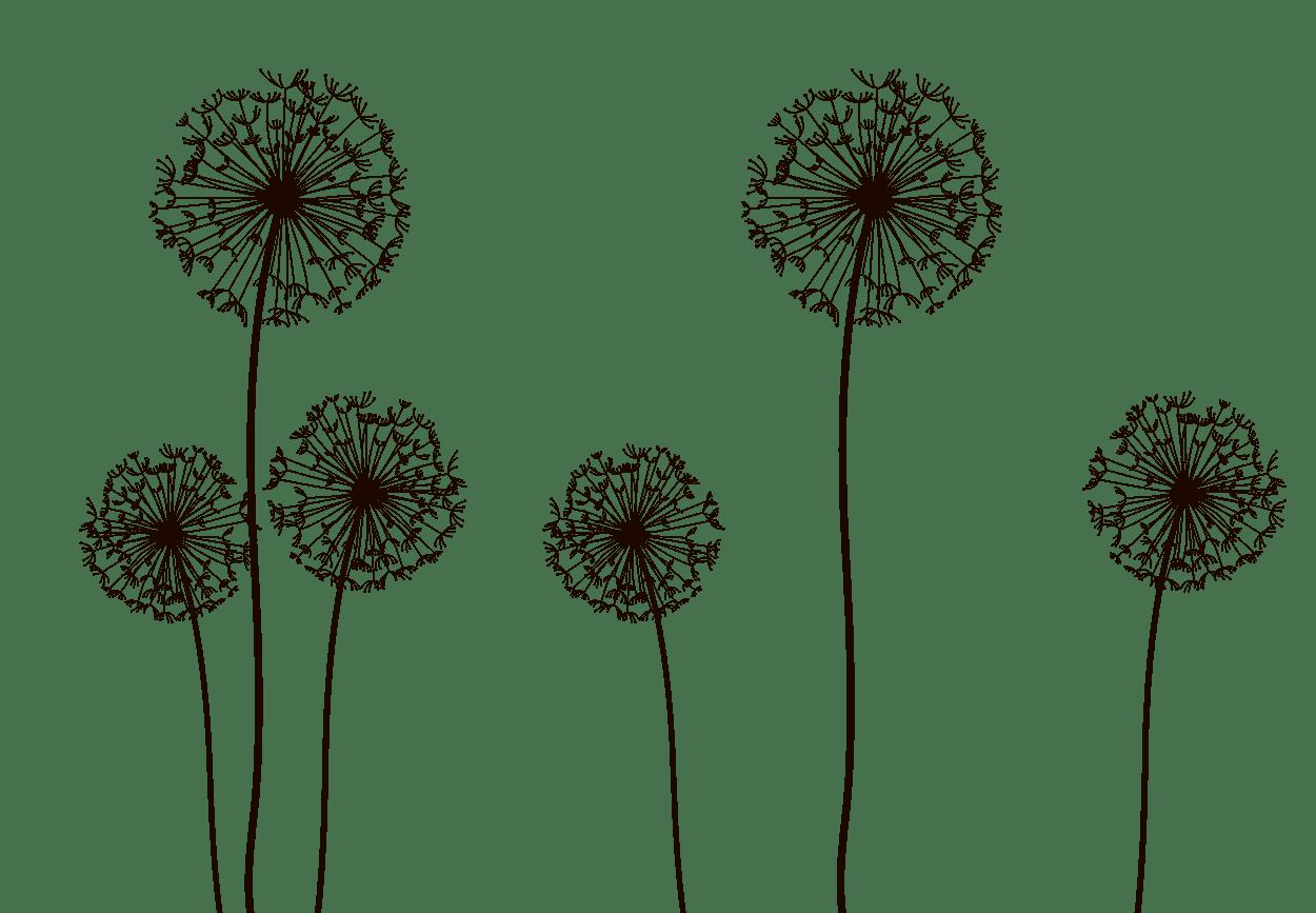 Dandelion Clipart Seed Dispersal Dandelion Seed Dispersal