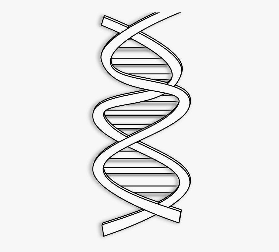 Dna clipart black and white, Dna black and white