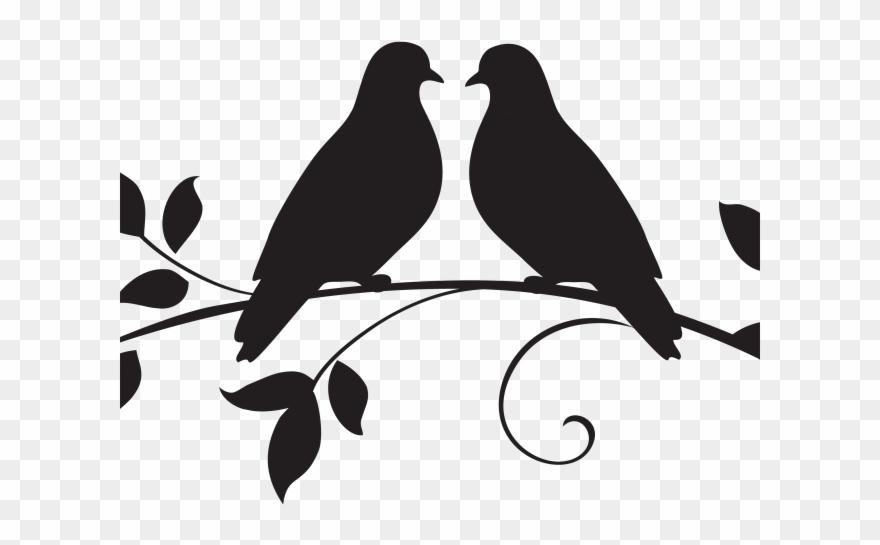 Dove clipart love dove, Dove love dove Transparent FREE