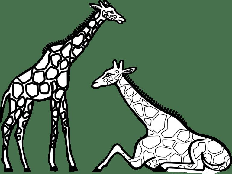 Footprint clipart giraffe, Footprint giraffe Transparent
