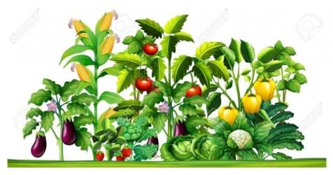 Garden clipart vegetable garden Picture #2740369 garden clipart vegetable garden