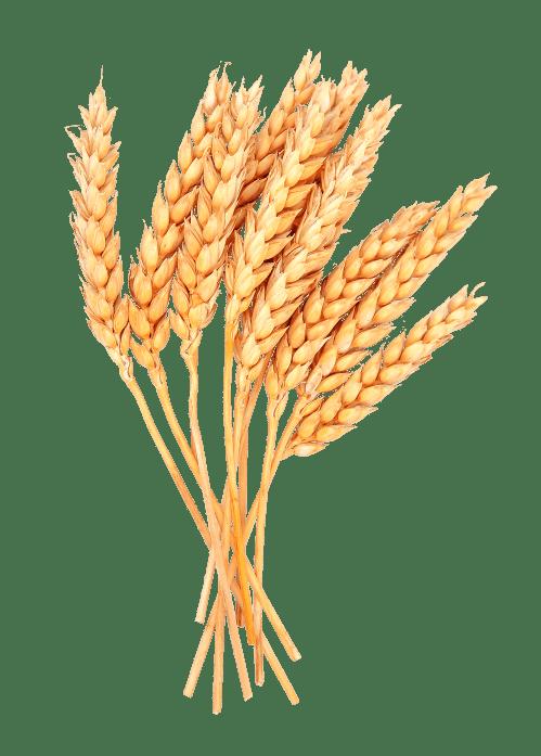 small resolution of grain clipart wheat bunch grass bundle huge