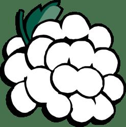 Grapes clipart outline Grapes outline Transparent FREE for download on WebStockReview 2020
