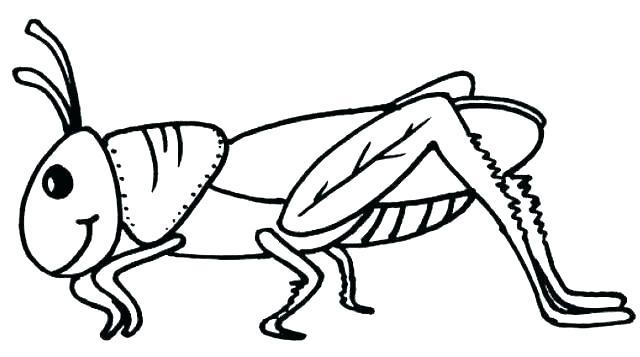 Grasshopper clipart color, Grasshopper color Transparent