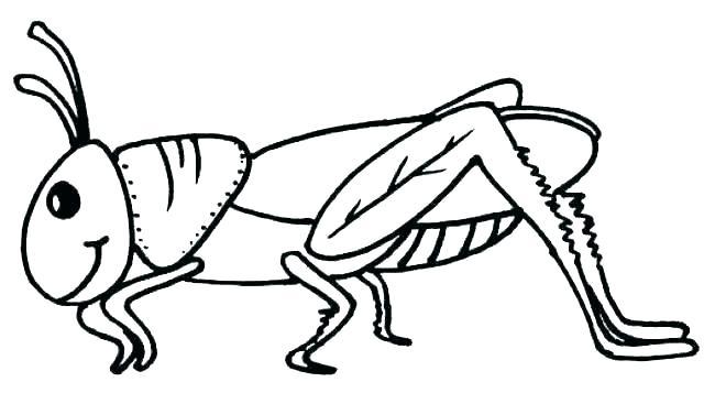 Grasshopper clipart colouring, Grasshopper colouring