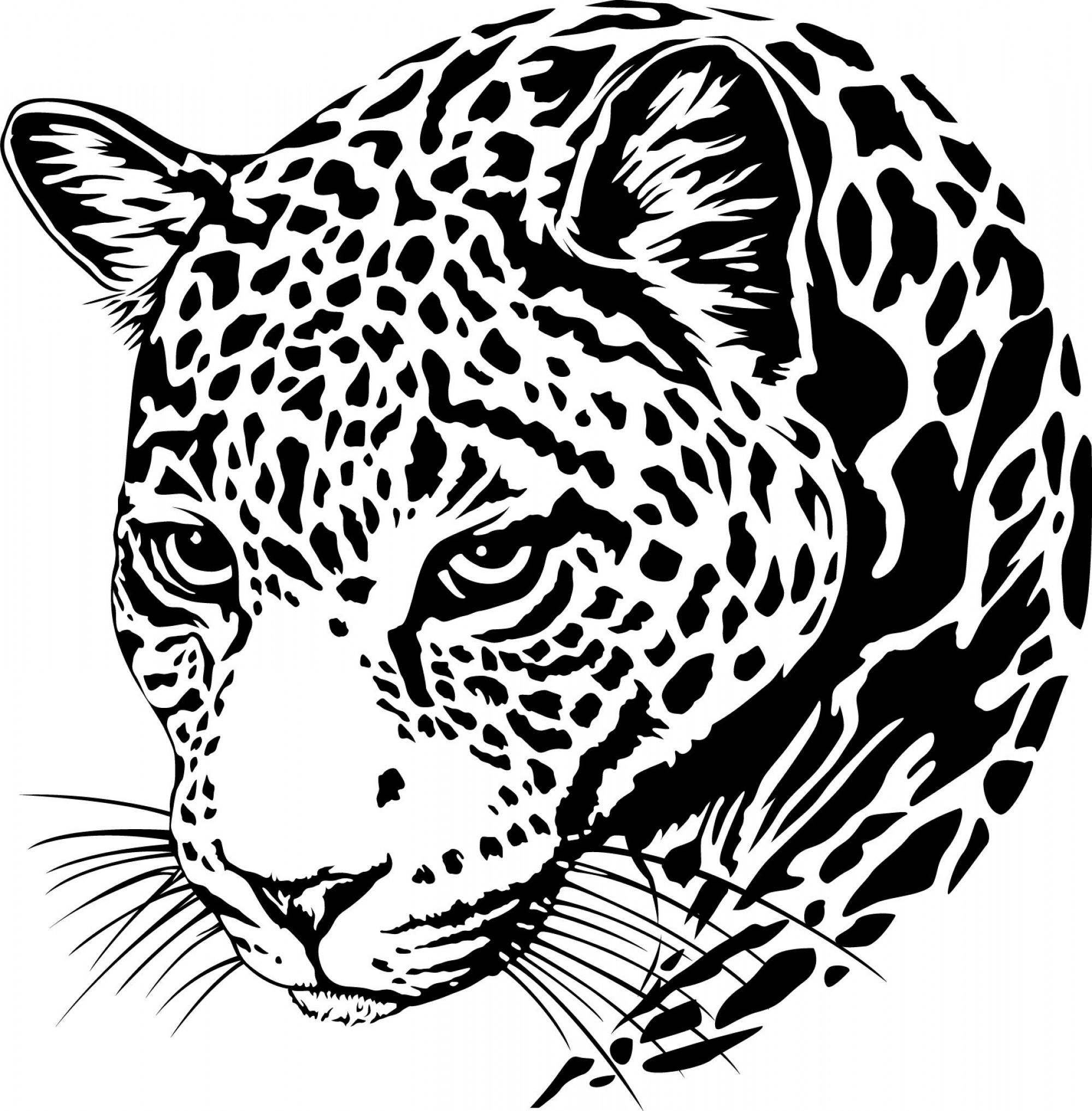 Jaguar Clipart Vector Jaguar Vector Transparent Free For