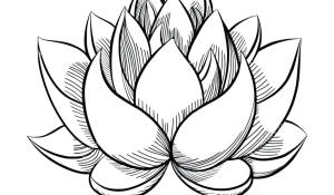 lotus easy drawing draw simple flower clipart plant clipartmag webstockreview rose grey