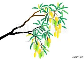 mango clipart tree branch fruit webstockreview bitten farmer