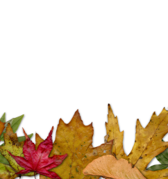 autumn leaves clipart corner free on dumielauxepices [ 3600 x 2177 Pixel ]
