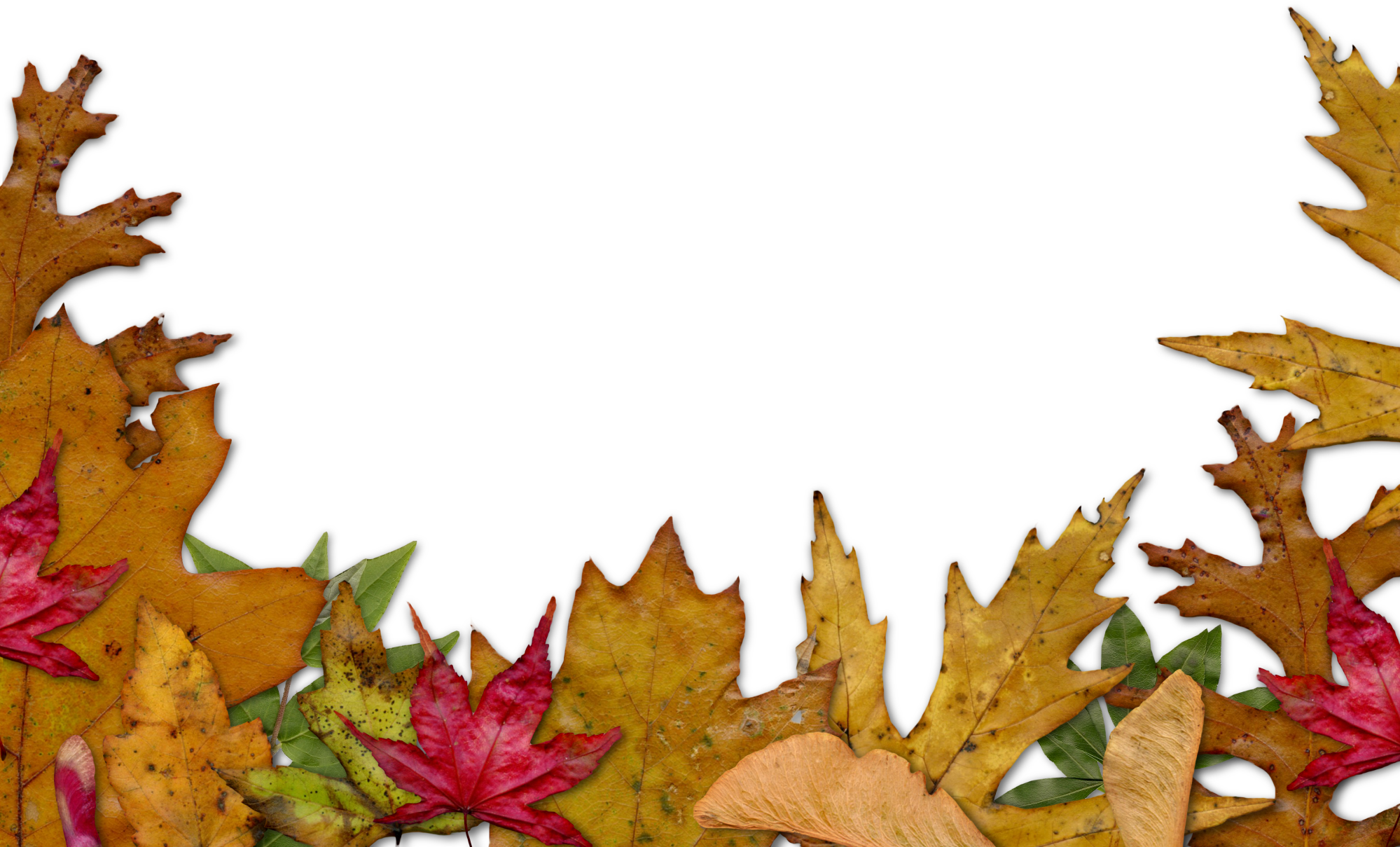 hight resolution of autumn leaves clipart corner free on dumielauxepices
