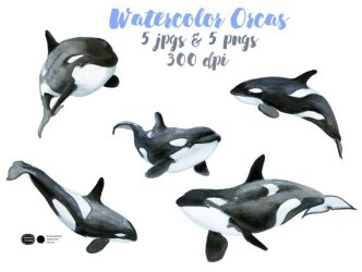 Orca clipart killer whale Orca killer whale Transparent FREE for download on WebStockReview 2020