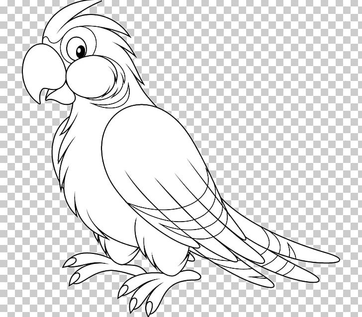 Parrot clipart black and white, Parrot black and white