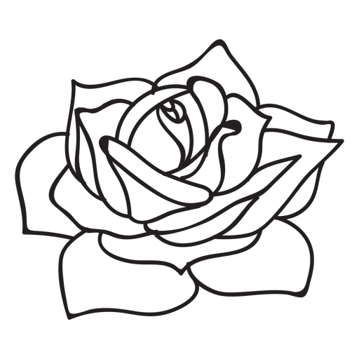 Roses vector png, Roses vector png Transparent FREE for