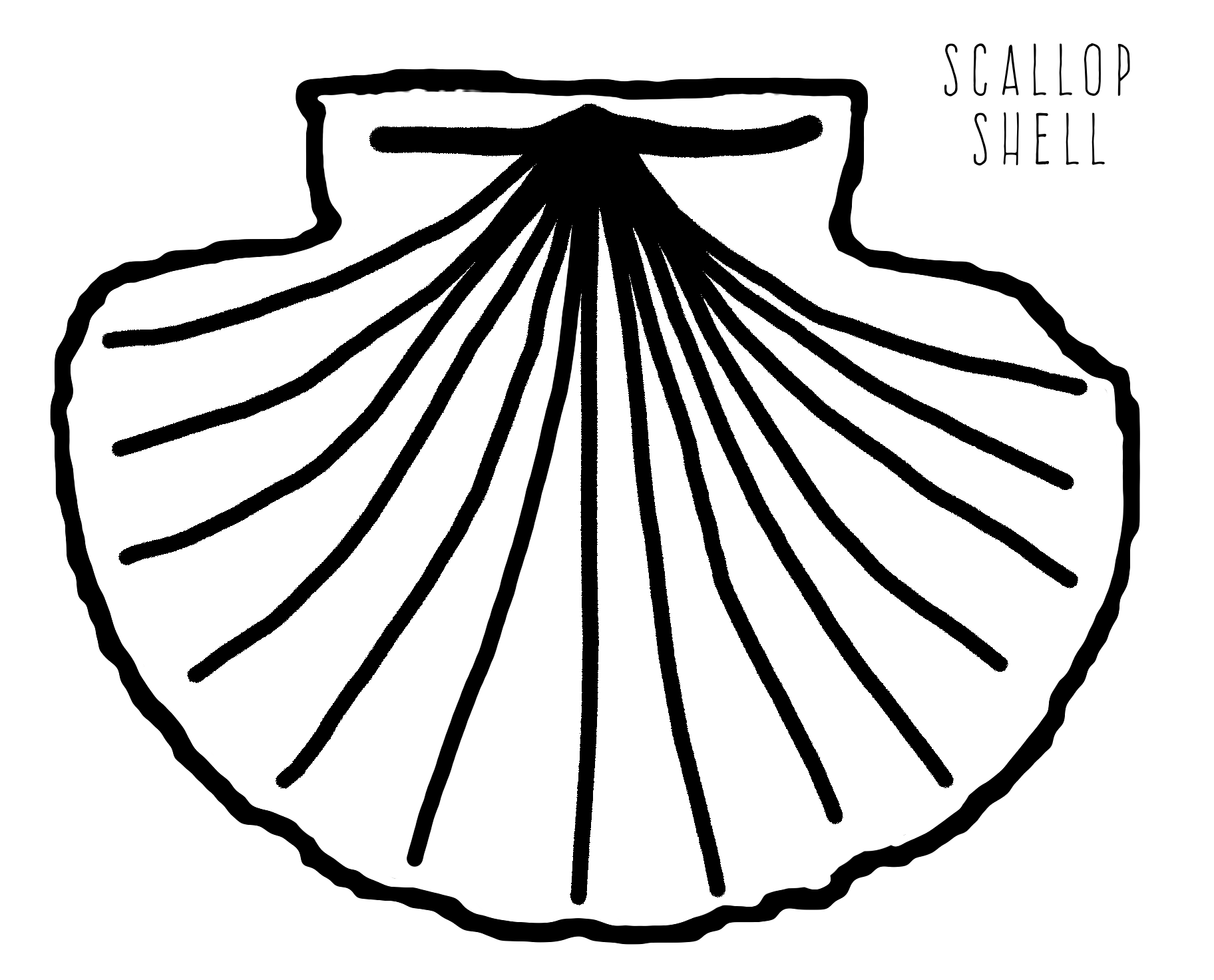 Shell Clipart Mussel Drawing Shell Mussel Drawing