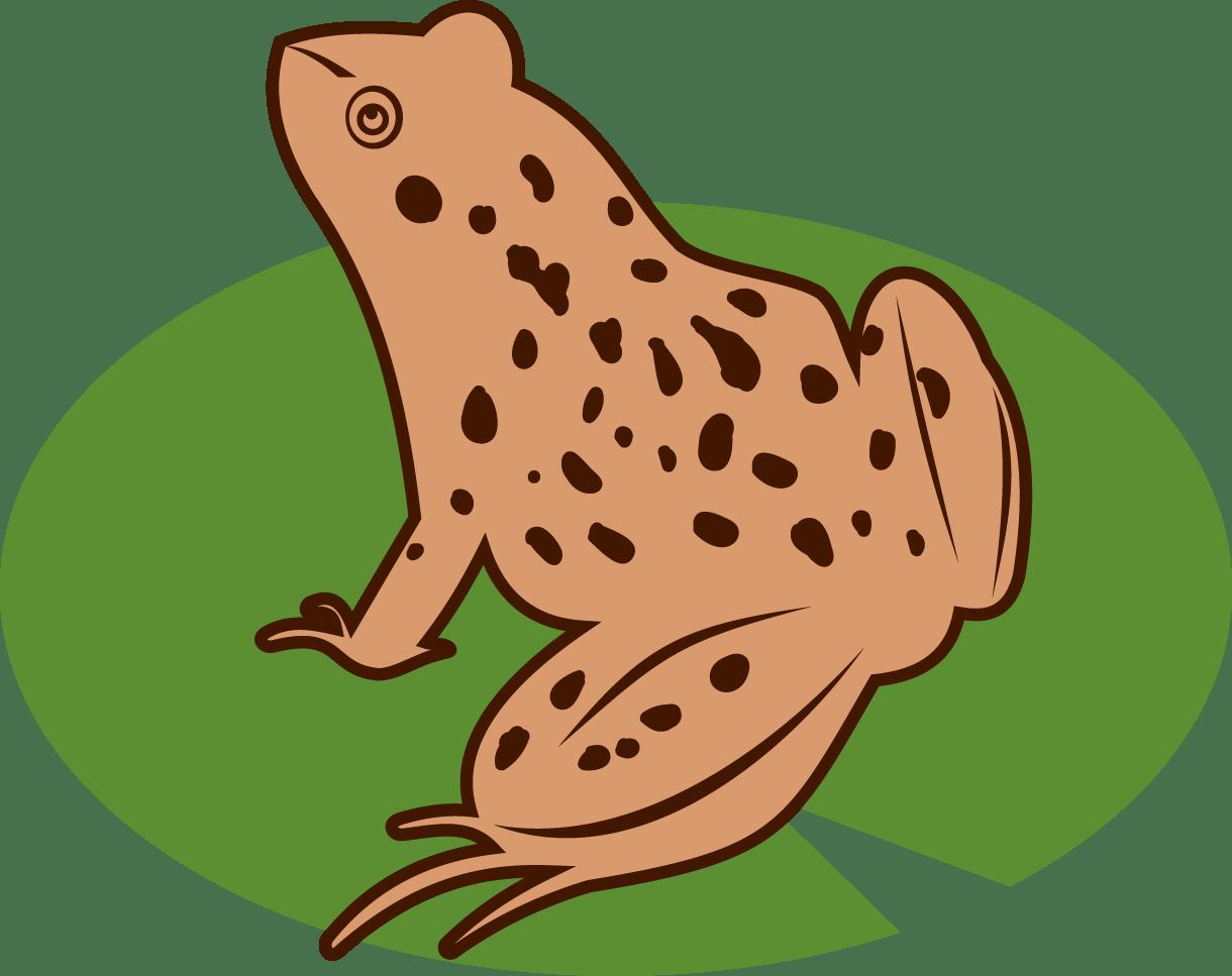 Toad Clipart Frog Habitat Toad Frog Habitat Transparent