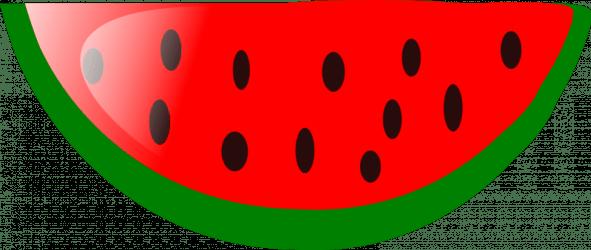 watermelon outline clipart transparent webstockreview cliparts seedles zone