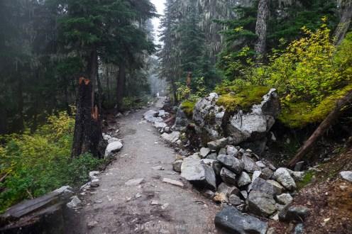 Lush trails at Joffre Lake Provincial Park.