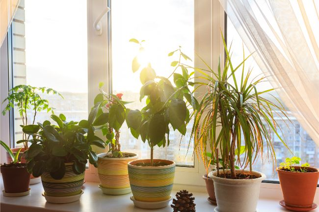 In bright natural day light ideally Infront of open window JAUNDICE