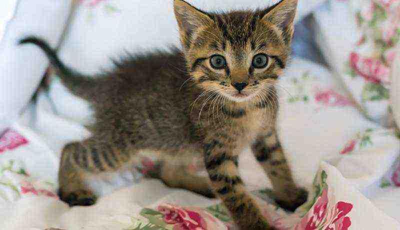 Os 40 Gatos Mais Fofos, Lindos E Pequenos Do Mundo
