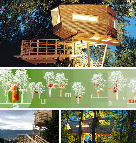 Modern but Traditional Tree House Design Architects