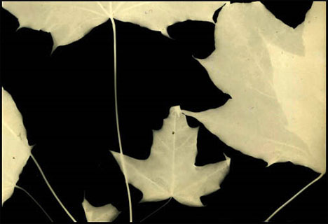 puja photogram leaves
