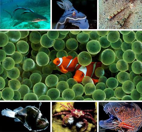 70 Weird Wild & Woolly Wonders Of The Natural World