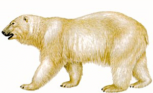 polar bear clipart clip bears fur walking animals amazing clipartix cliparting clipartandscrap quite really adult detail library related