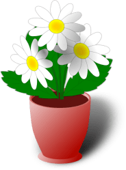 clipart transparent background flower pot daisy camomile vector graphic clip flowers nature daisies own plain clipground case want webweaver nu