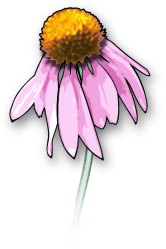 Free Flower Clipart and Graphics