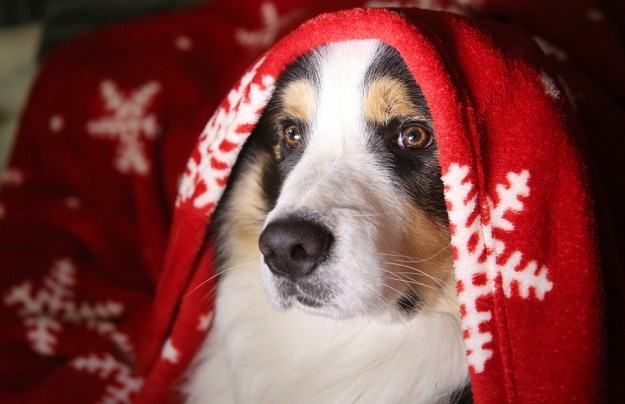 Border Collie Geheimen Reviews