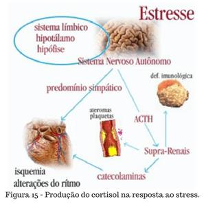Produção do cortisol na resposta ao stress