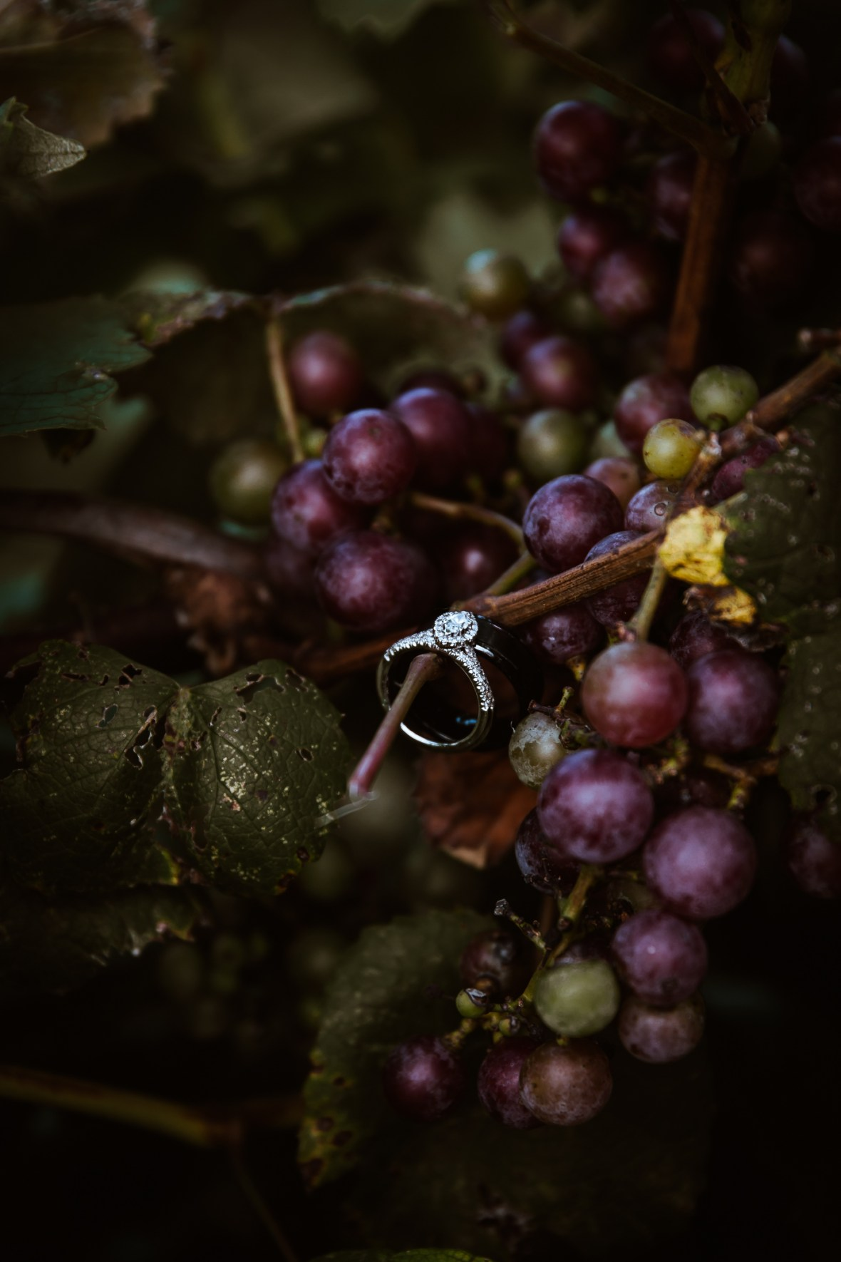 Bruners Farm & Winery, Wedding, Guston Kentucky
