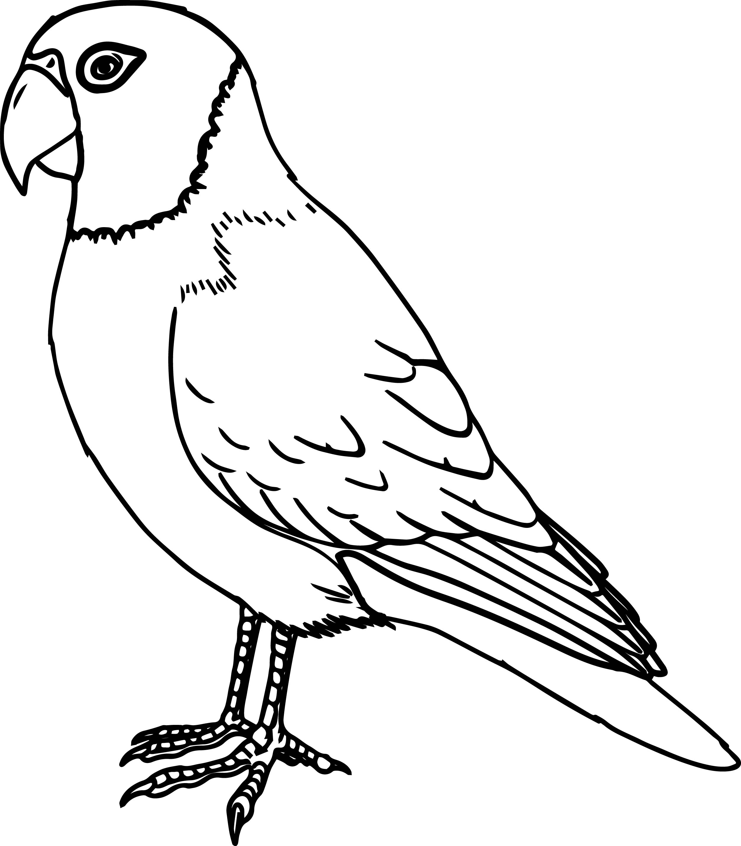 Detailed Page For The African Grey Parrot Coloring Pages