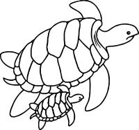 Print out Baby Turtle Coloring book Pages - Free Printable ... | 188x200