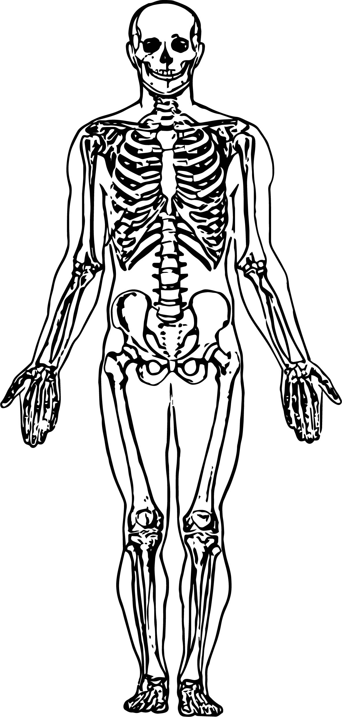 Human Head And Neck Muscles Diagram Whole Skeleton Picture Sketch Drawing Coloring Page