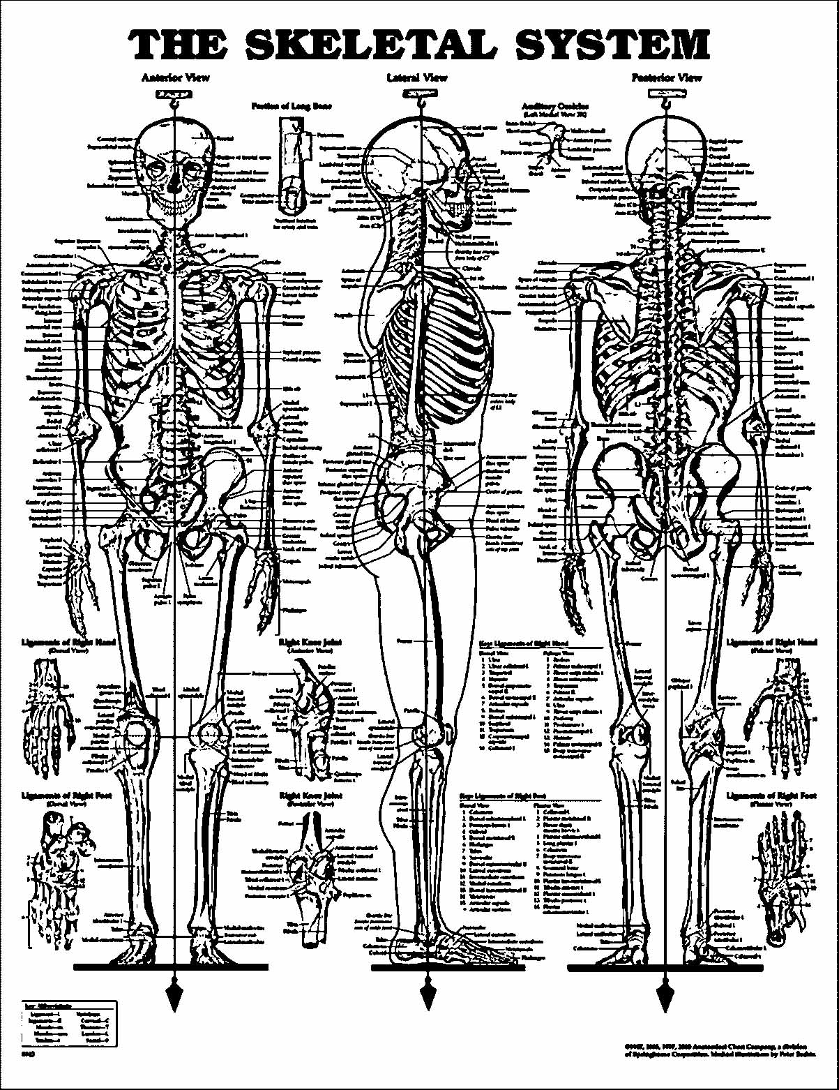 anatomy and physiology worksheet printable