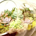 Simple Wedding Centerpieces For A Handcrafted Wedding Glass Tube Terrarium