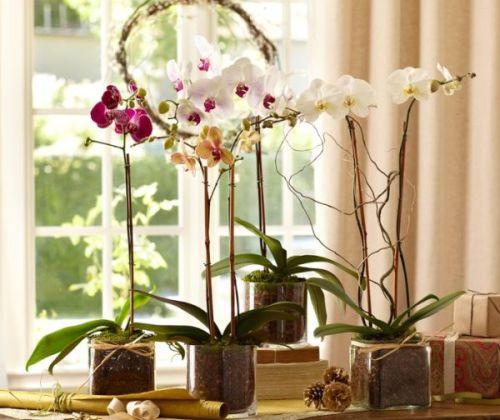 Phalaenopsis Orchid Glass Vase