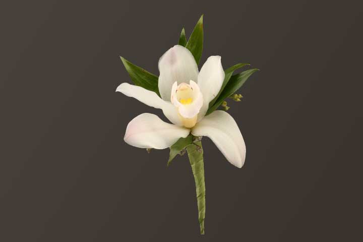 PICTURE OF WHITE ORCHID BOUTONNIERE