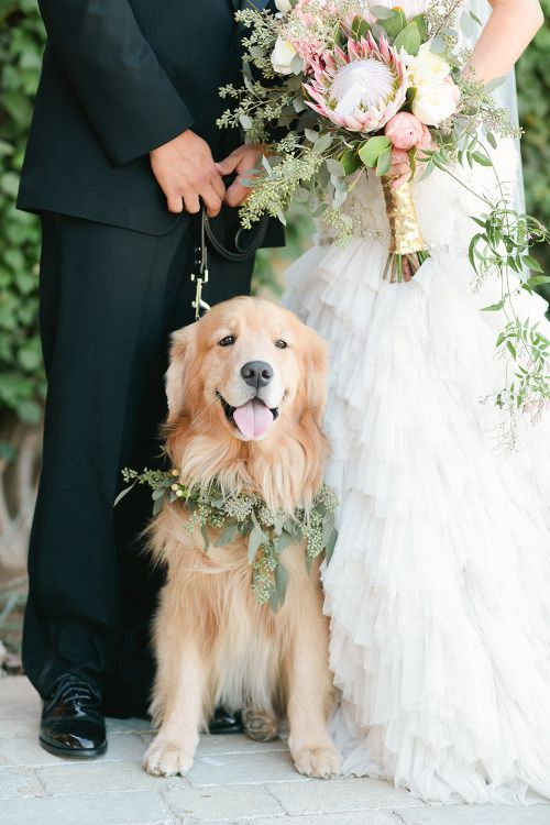 Portare il vostro cane al matrimonio: ecco alcuni consigli per coinvolgerlo | Wedding time - il blog dedicato al matrimonio